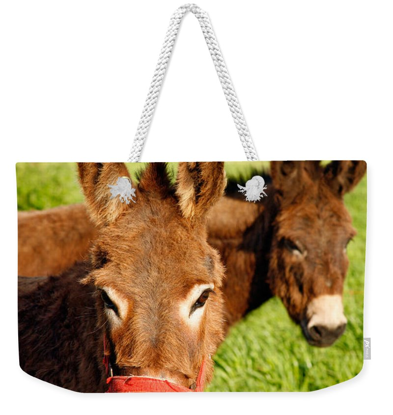 Animals Weekender Tote Bag featuring the photograph Two Donkeys by Gaspar Avila