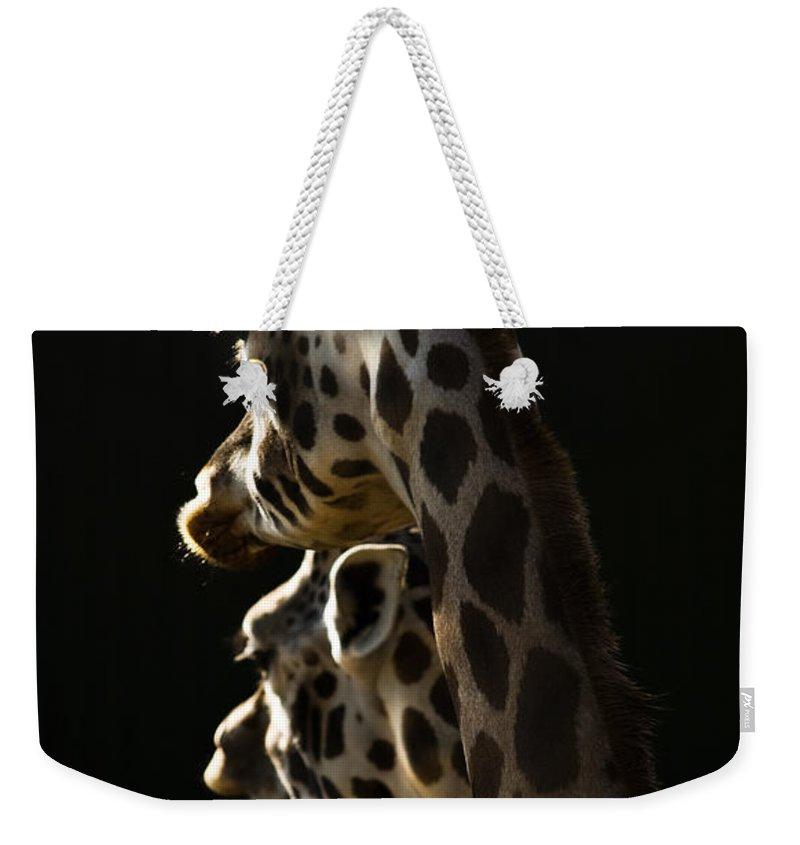 Giraffe Weekender Tote Bag featuring the photograph Two Headed Giraffe by Angel Ciesniarska