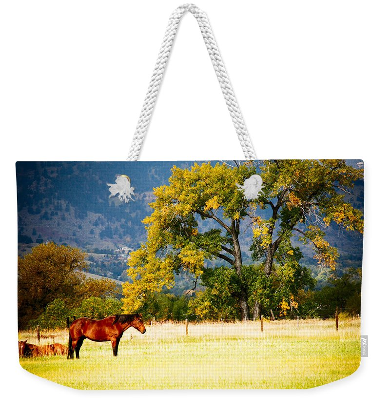 Animal Weekender Tote Bag featuring the photograph Two Horses by Marilyn Hunt