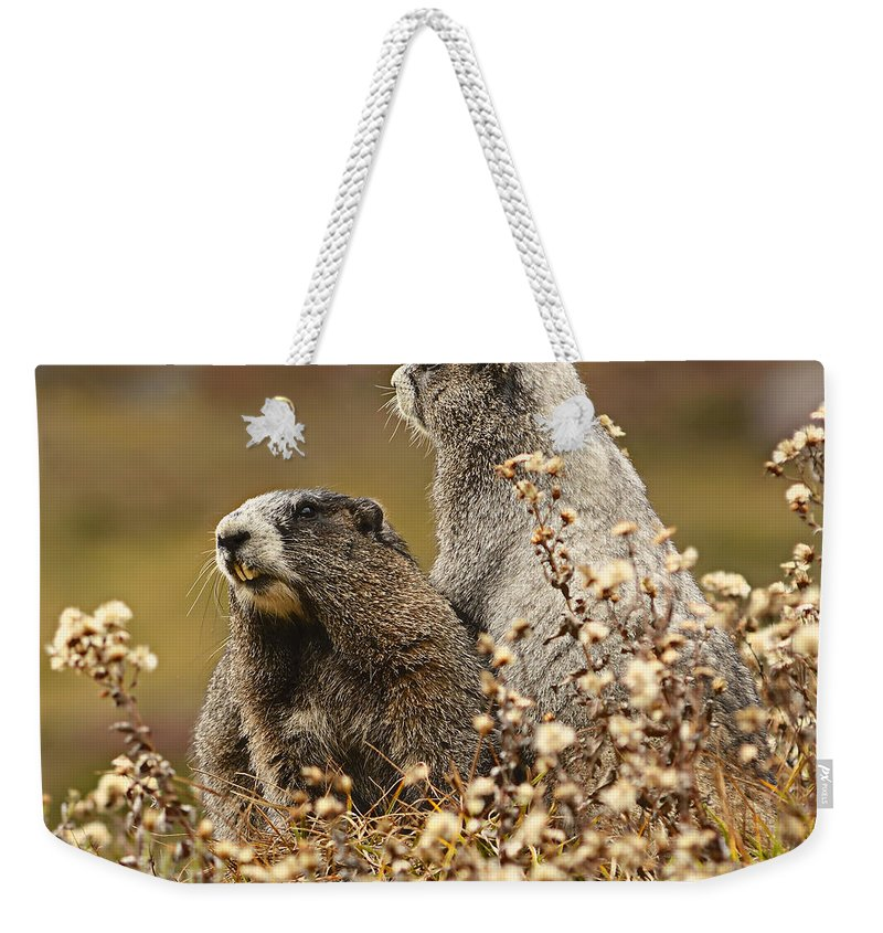 Adorable Weekender Tote Bag featuring the photograph Two Marmots by Marv Vandehey
