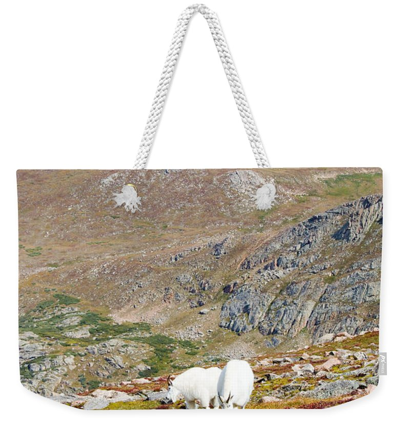 Goat Weekender Tote Bag featuring the photograph Two Mountain Goats On Mount Bierstadt In The Arapahoe National Fores by Steve Krull