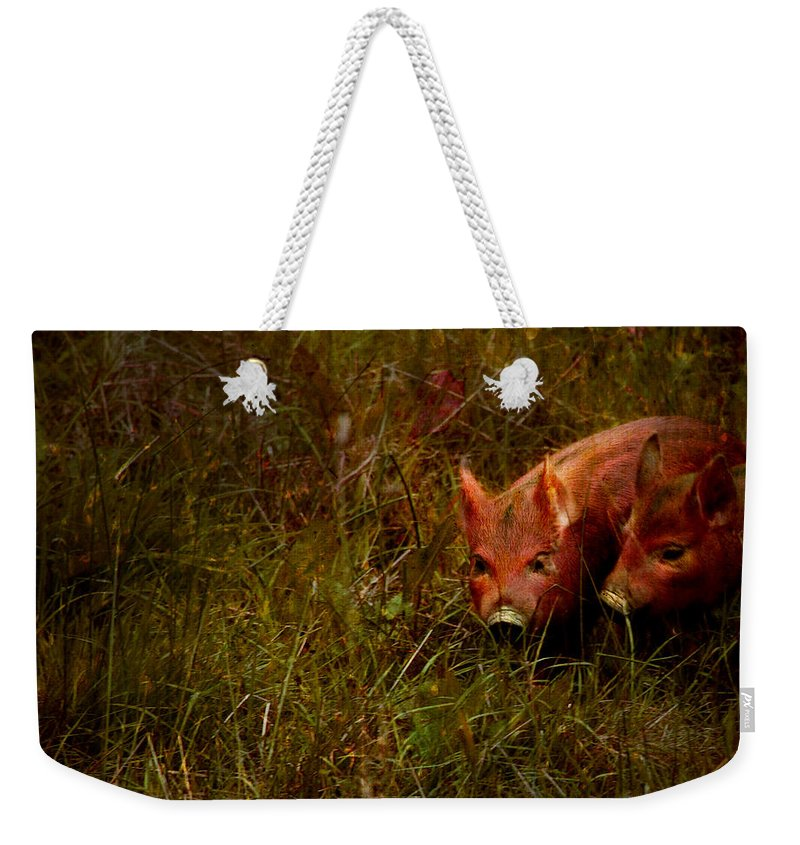 Piglets Weekender Tote Bag featuring the photograph Two Piglets by Angel Ciesniarska