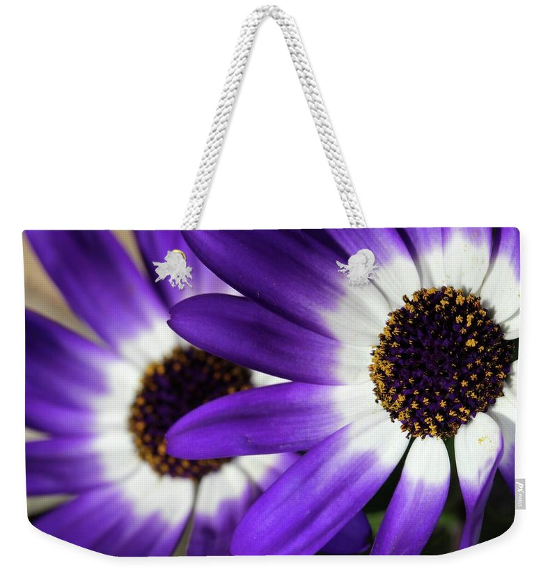 Flower Weekender Tote Bag featuring the photograph Two Purple N White Daisies by Sabrina L Ryan