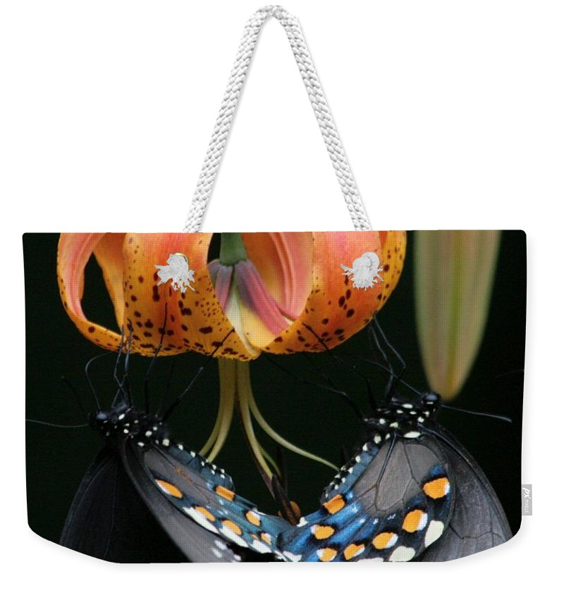Spicebush Swallowtail Weekender Tote Bag featuring the photograph Two Spicebush Swallowtail Butterflies On A Turks Cap Lily by David Rowe