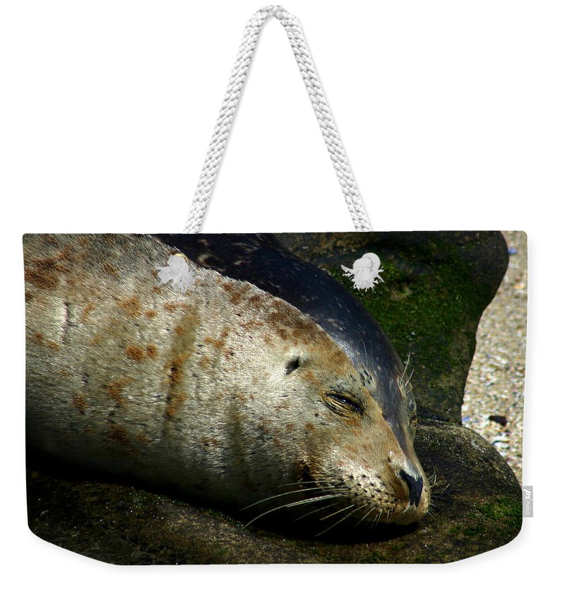 Seal Weekender Tote Bag featuring the photograph Two Tone Seal by Anthony Jones
