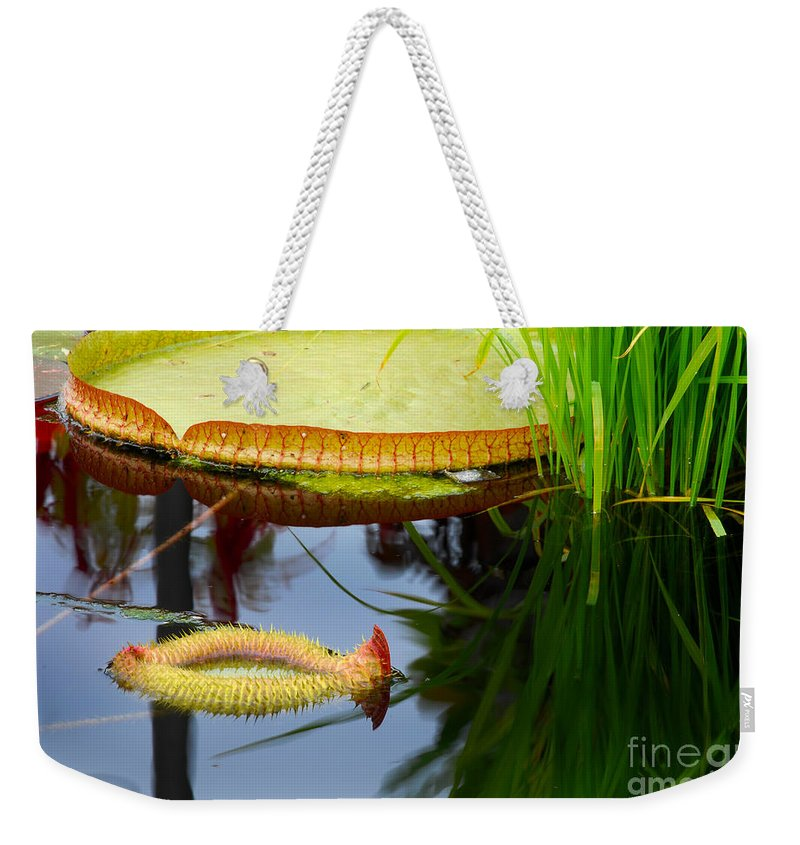 Water Weekender Tote Bag featuring the photograph Two Victoria Water Lilypads by Nancy Mueller