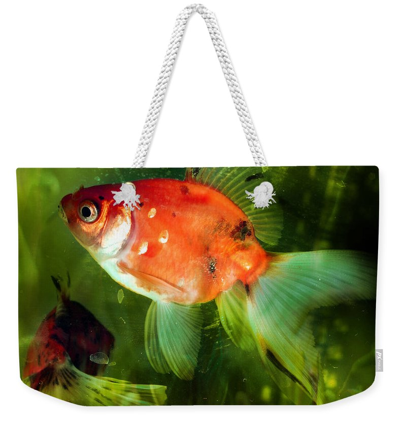 Goldfish Weekender Tote Bag featuring the photograph Underwater World by Angel Ciesniarska