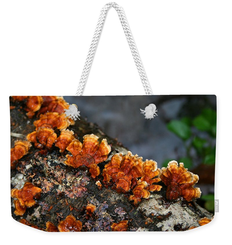 Bright Orange Nature Wet Forest Fungus Tree Wood Closeup Macro Weekender Tote Bag featuring the photograph Unexpected Brightness by Andrei Shliakhau