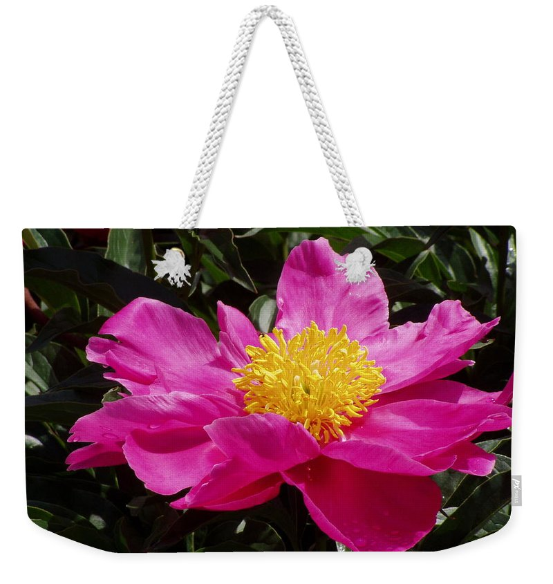 Rose Weekender Tote Bag featuring the photograph Unfolding by Ian MacDonald