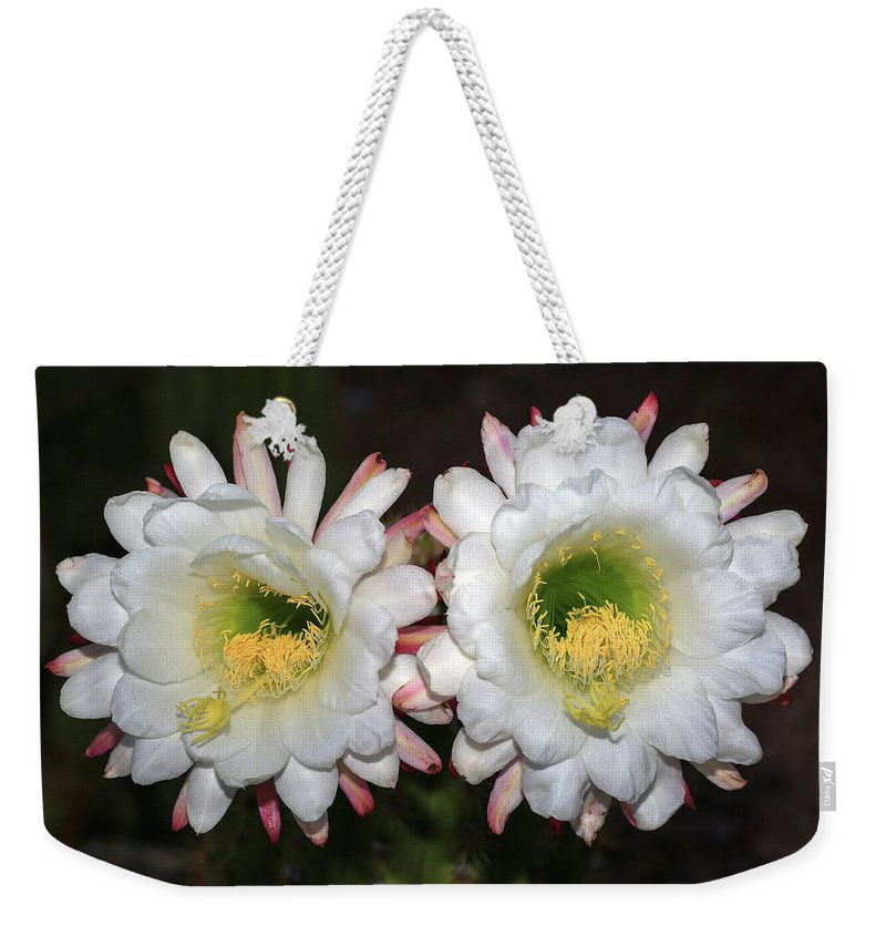 Argentine Giant Cactus Weekender Tote Bag featuring the photograph Unforgettable by Donna Kennedy