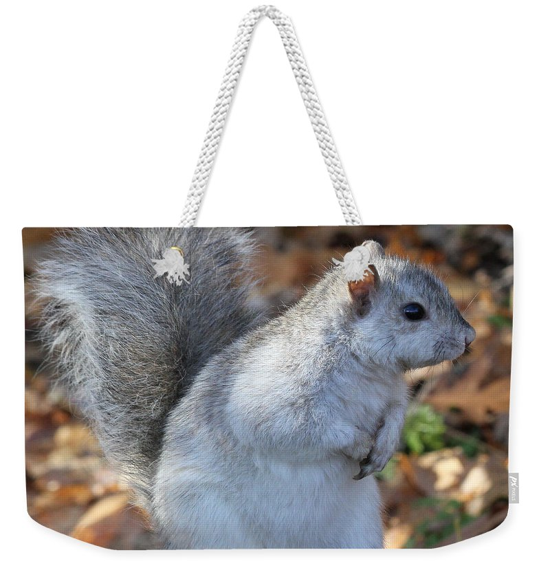 Squirrel Weekender Tote Bag featuring the photograph Unusual White And Gray Squirrel by Doris Potter