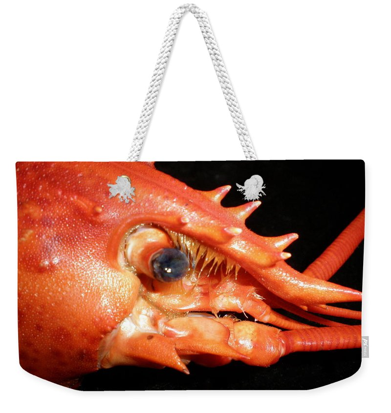 Lobster Weekender Tote Bag featuring the photograph Up Close Lobster by Patricia Piffath
