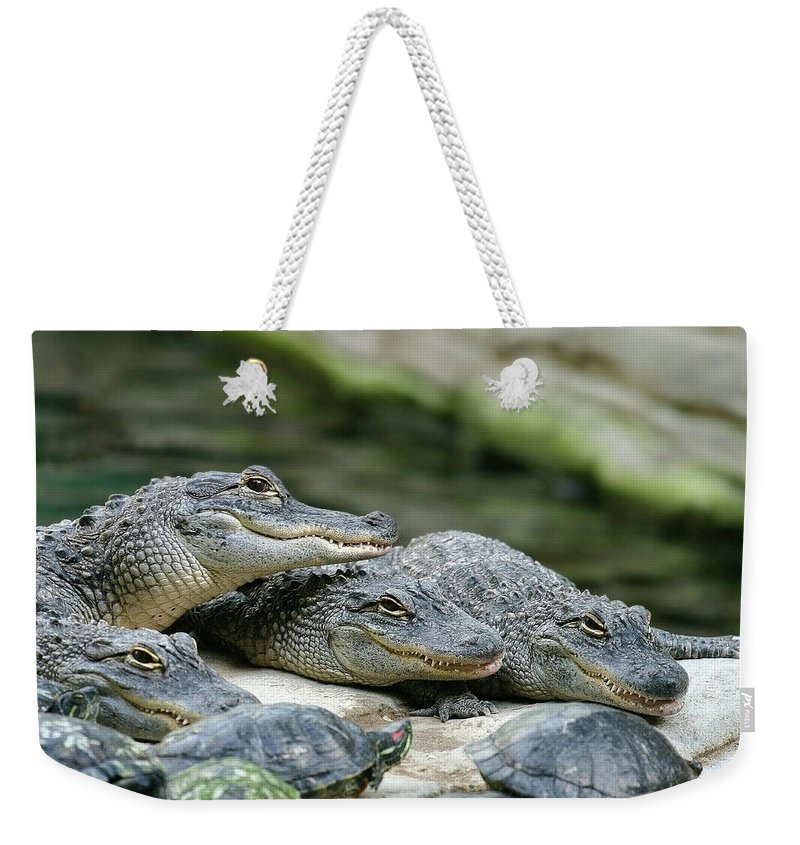 Alligator Weekender Tote Bag featuring the photograph Up to No Good by Anthony Jones