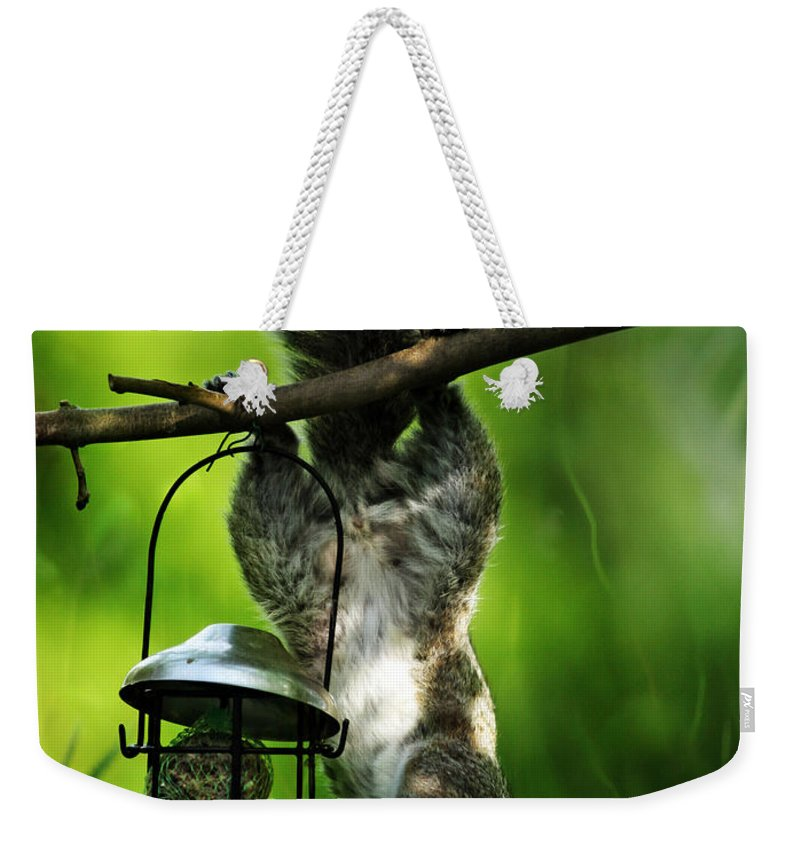 Squirrel Weekender Tote Bag featuring the photograph Upside Down by Angel Tarantella