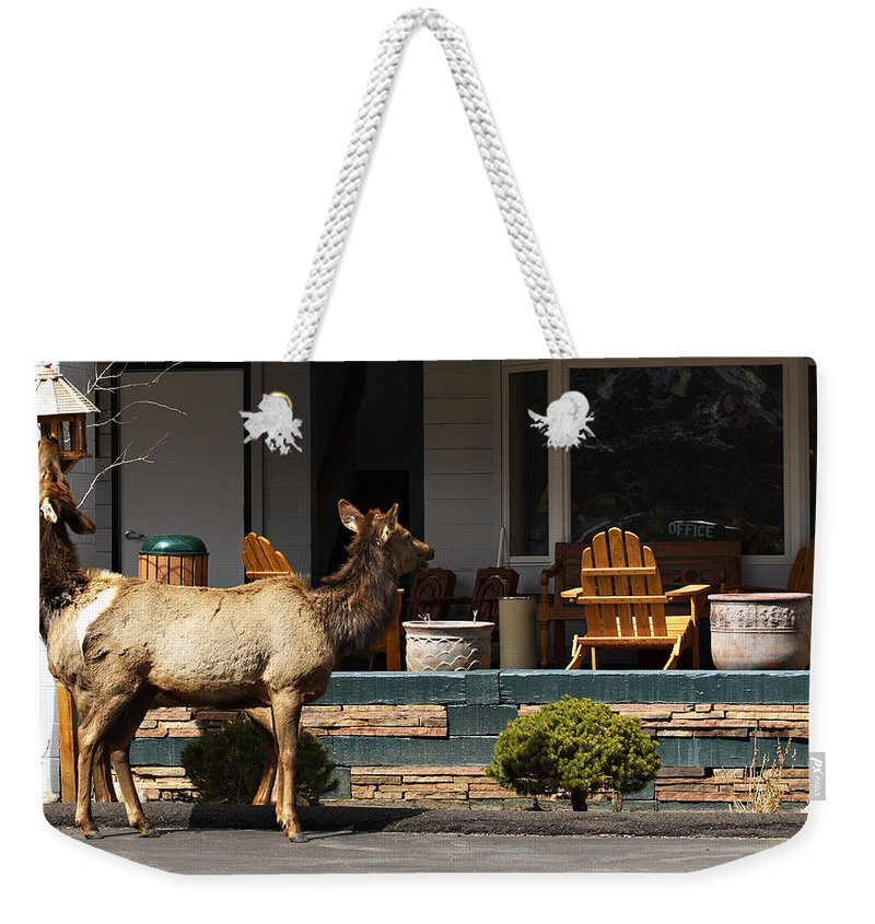 Elk Weekender Tote Bag featuring the photograph Urban Elk by Marilyn Hunt