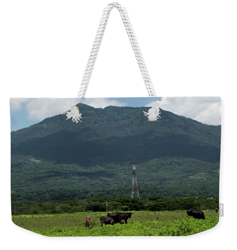 Cows Weekender Tote Bag featuring the photograph Vacas De Ahuachapan 4 by Totto Ponce