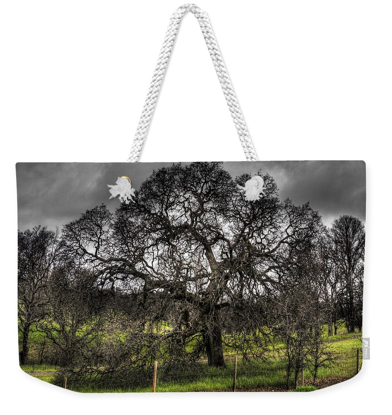 Landscape Weekender Tote Bag featuring the photograph Valley Oak by Lee Santa