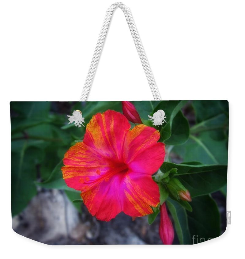 Flower Weekender Tote Bag featuring the photograph Variegated 4 O'clock by John Myers