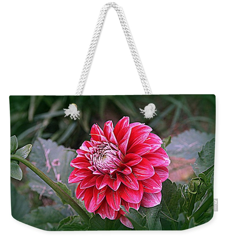 Dahlia Weekender Tote Bag featuring the photograph Variegated Colored Dahlia by Kay Novy