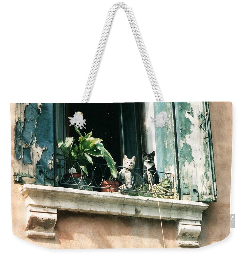 Venice Weekender Tote Bag featuring the photograph Venetian Cats by Lauri Novak