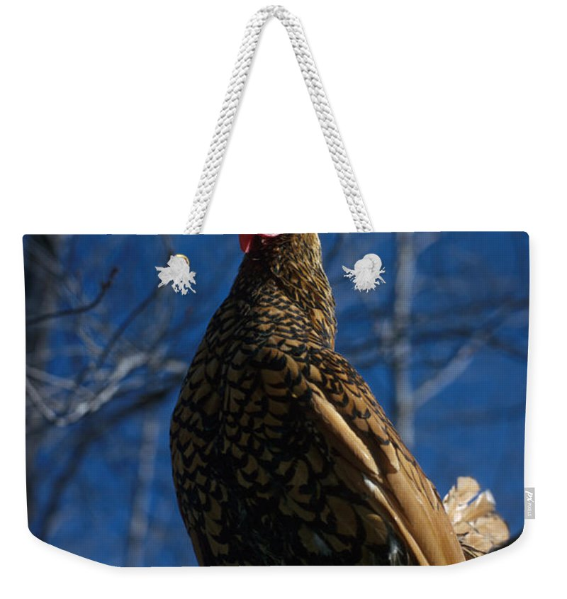 Chicken Weekender Tote Bag featuring the photograph Vernon by Jerry McElroy