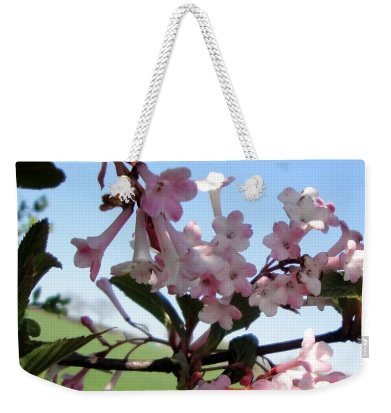 Nature Weekender Tote Bag featuring the photograph Vibernum Pink Dawn by Susan Baker