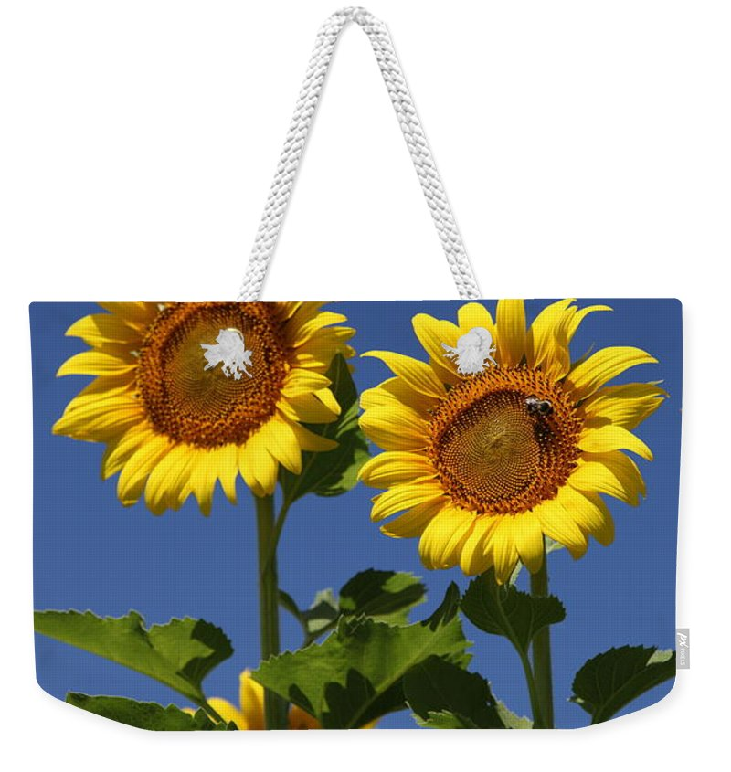 Sunflower Weekender Tote Bag featuring the photograph Viewing The Past by Amanda Barcon