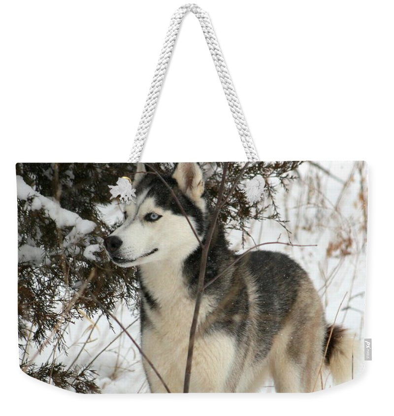 Animal Weekender Tote Bag featuring the photograph Vigilant by David Dunham