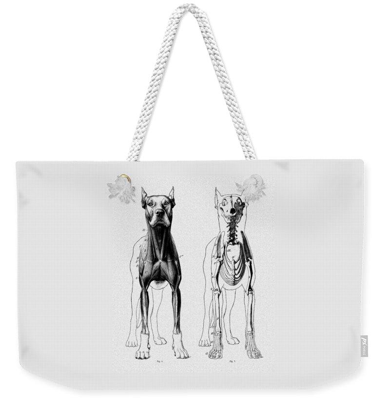 Vintage Dog Anatomy Scientific Illustration Weekender Tote Bag For