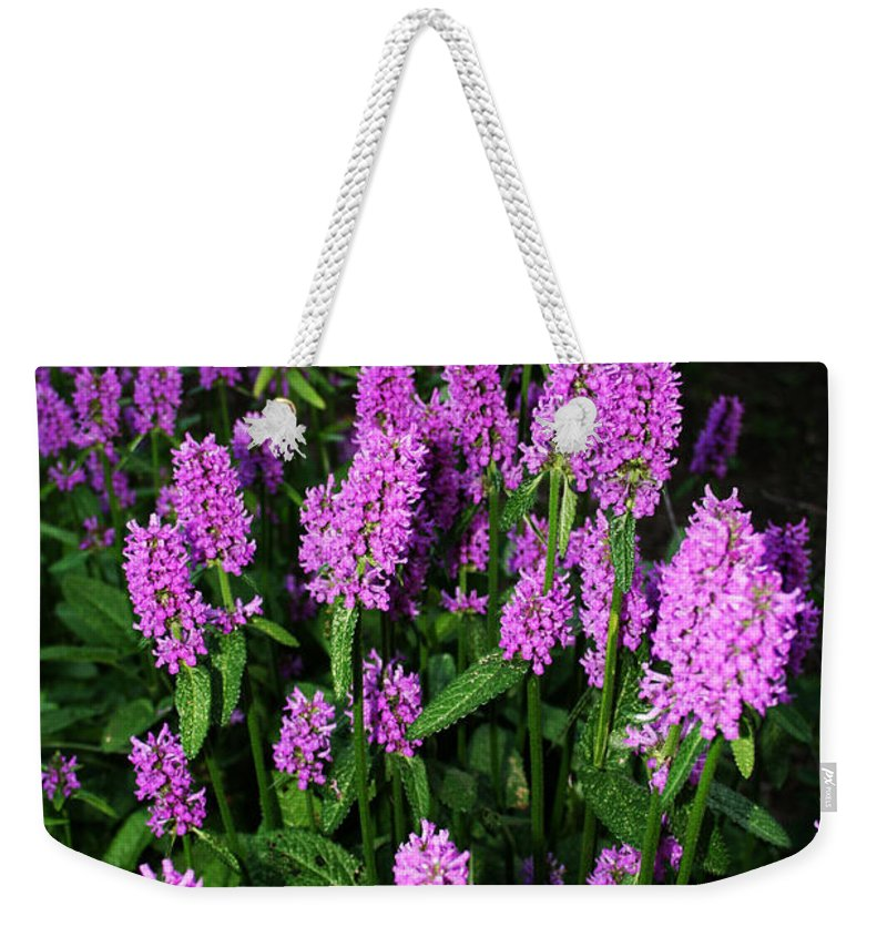 Weekender Tote Bag featuring the photograph Violet by Jamie Lynn