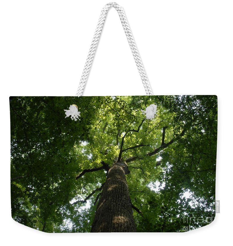 Joyce Kilmer Memorial Forest Weekender Tote Bag featuring the photograph Virgin Canopy by David Lee Thompson