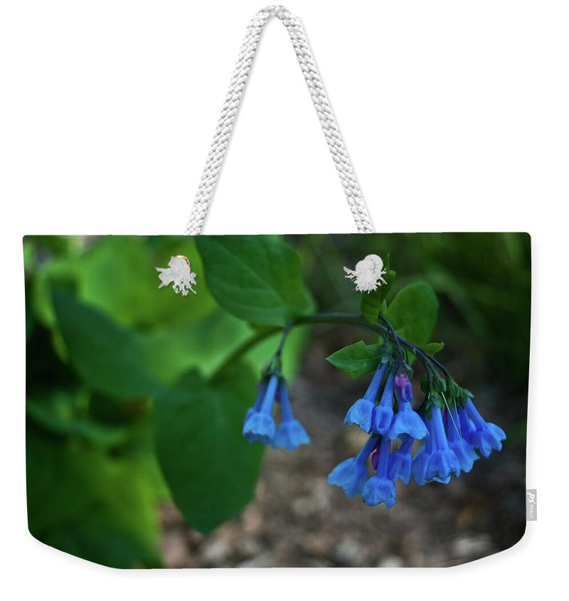 Virginia Weekender Tote Bag featuring the photograph Virginia Bluebells In The Early Morning by Douglas Barnett
