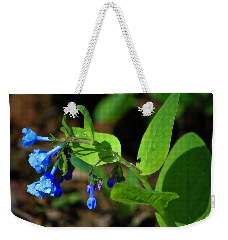 Virginia Weekender Tote Bag featuring the photograph Virginia Bluebells by Teresa Mucha