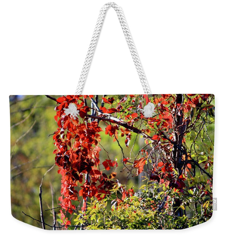 Virginia Weekender Tote Bag featuring the photograph Virginia Creeper by Teresa Mucha