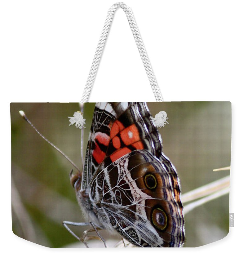 Butterfly Weekender Tote Bag featuring the photograph Virginia Lady Butterfly Side View by Carol Groenen