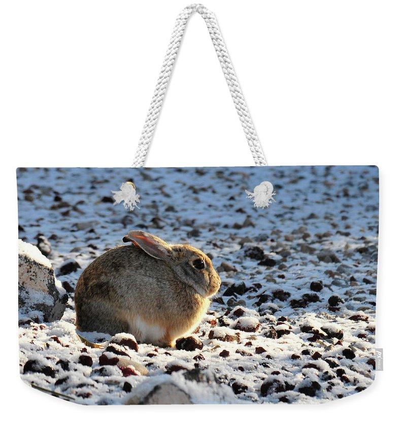 Animal Weekender Tote Bag featuring the photograph Wabbit by David Arment