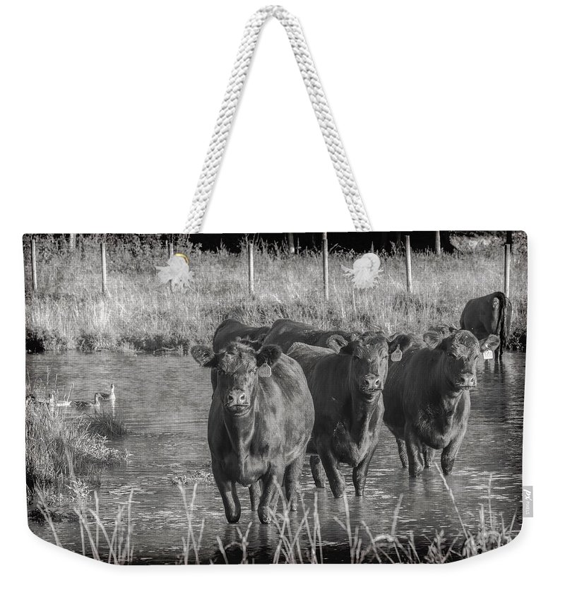 Farm Life Weekender Tote Bag featuring the photograph Wading Moos by Jim Love