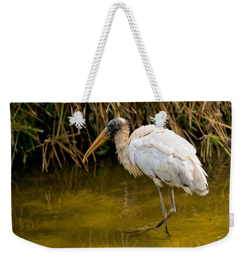 Nature Weekender Tote Bag featuring the photograph Wading Wood Stork by Christopher Holmes