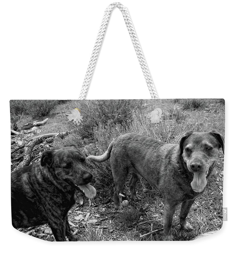 Dogs Weekender Tote Bag featuring the photograph Wagging Tongues by Donna Blackhall