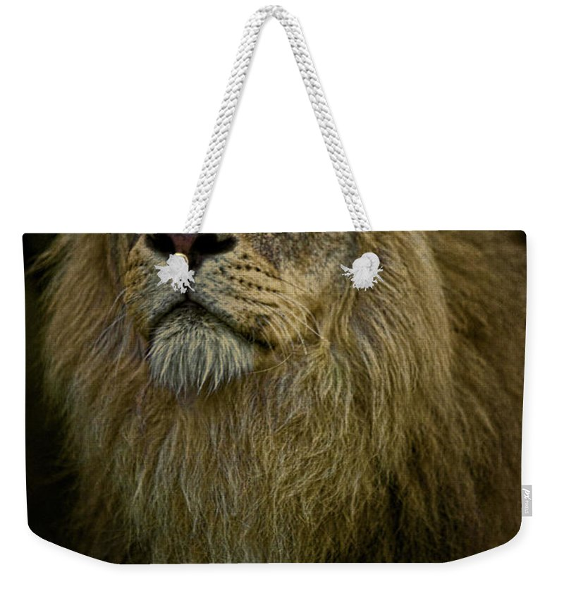Lion Weekender Tote Bag featuring the photograph Waiting Expectantly by Chris Lord