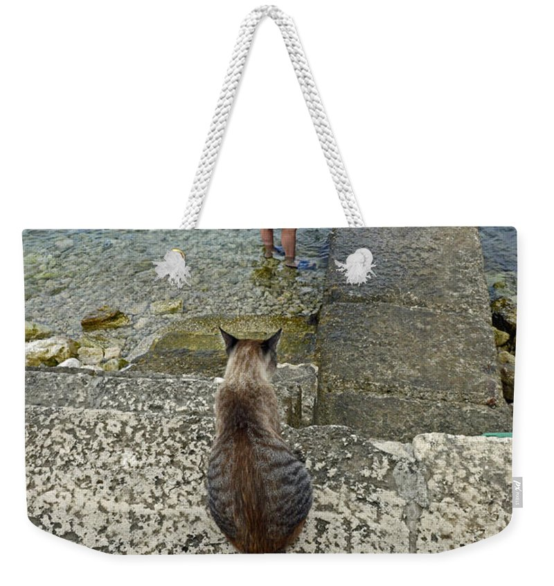 Cat Looking For Food Weekender Tote Bag featuring the photograph Waiting For A Meal by Elaine Berger