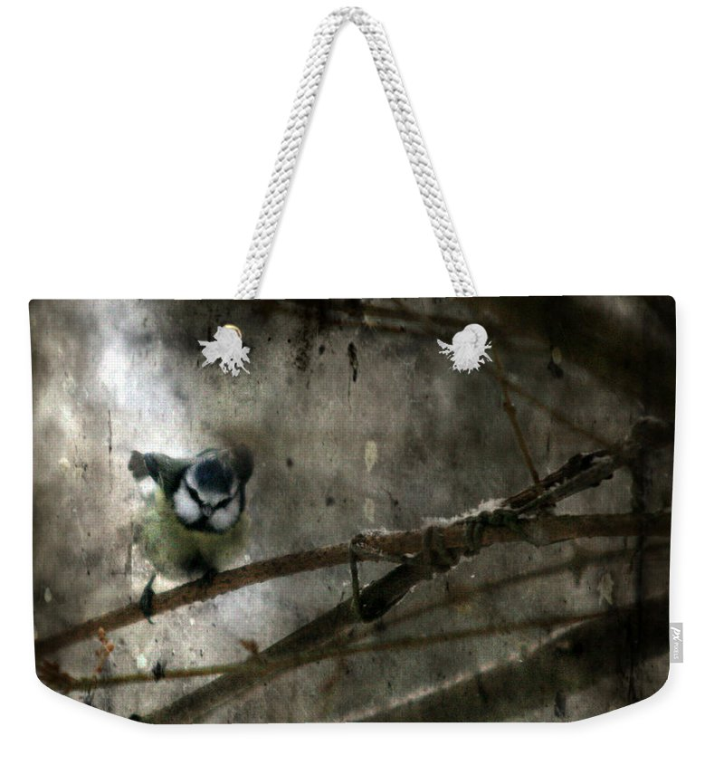 Blue Tit Weekender Tote Bag featuring the photograph Waiting For Spring by Angel Ciesniarska