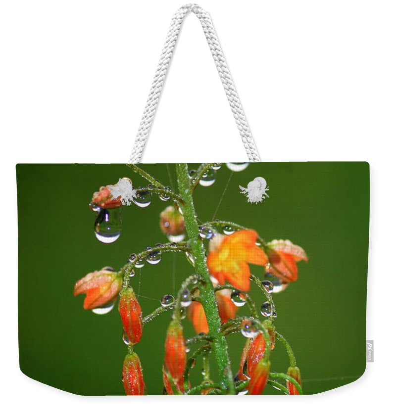 Green And Orange Weekender Tote Bag featuring the photograph Waiting For Sunshine by Carol Groenen