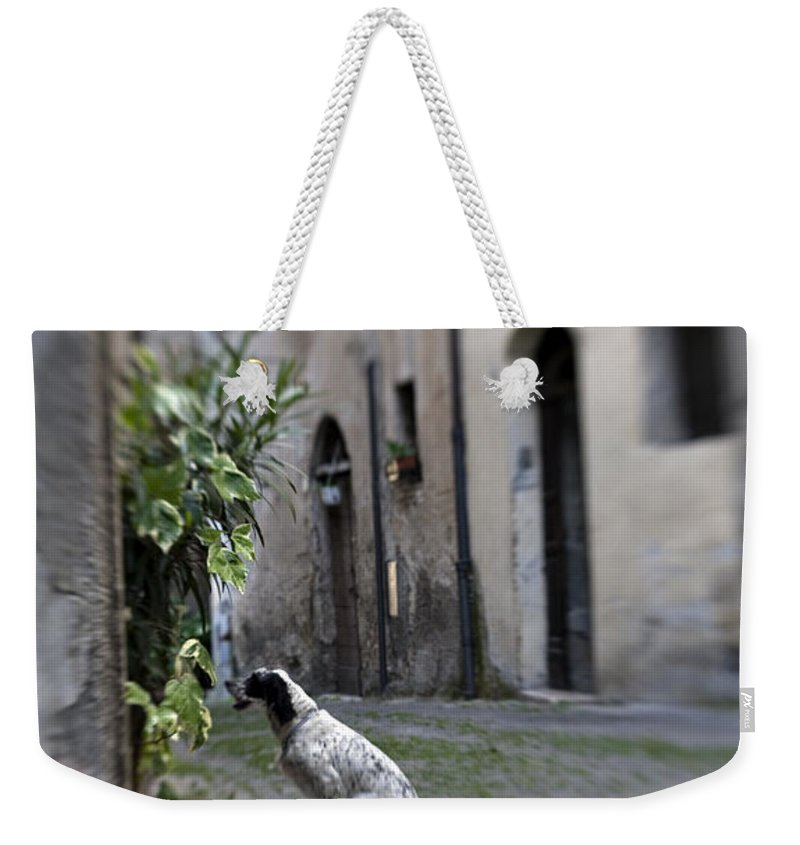 Dog Weekender Tote Bag featuring the photograph Waiting by Marilyn Hunt