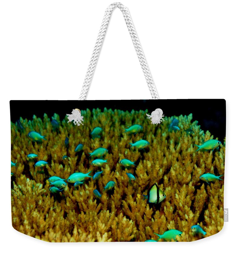 Underwater Weekender Tote Bag featuring the photograph Waldo by Mumbles and Grumbles