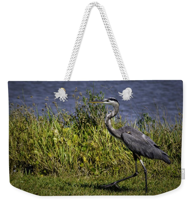 Bird Weekender Tote Bag featuring the photograph Walking Away by Leticia Latocki