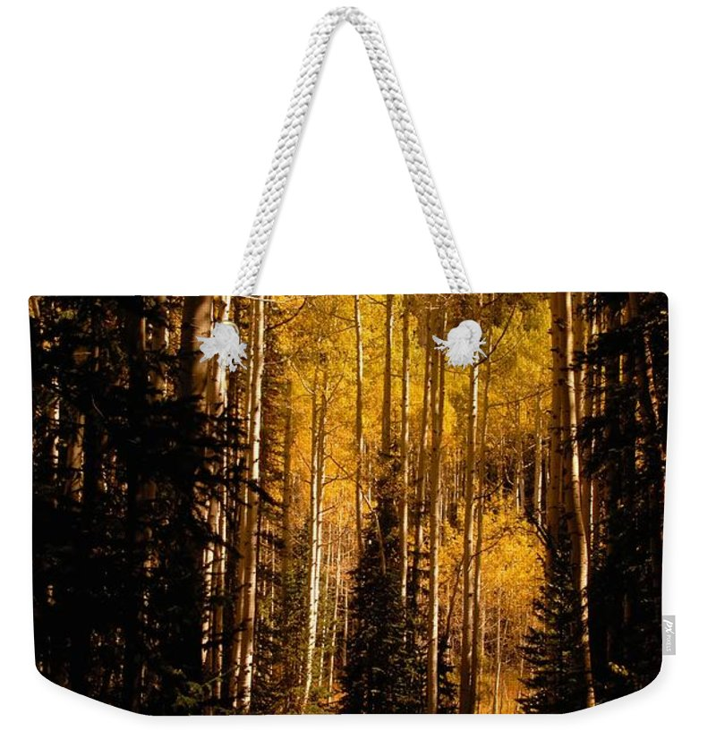 Landscape Weekender Tote Bag featuring the photograph Walking With Aspens by David Lee Thompson