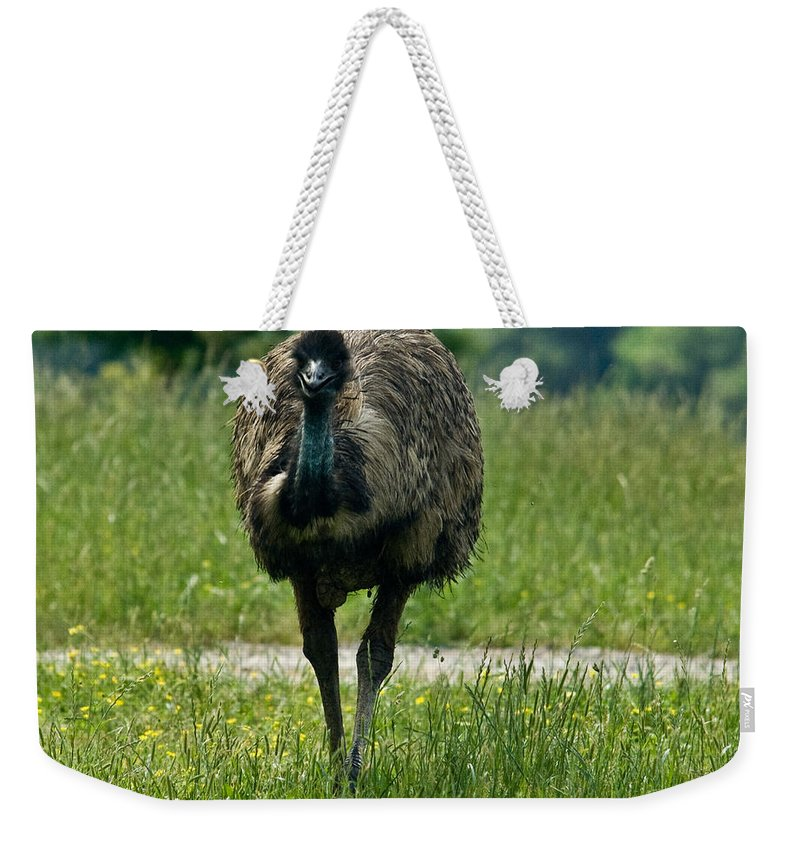 Wandering Weekender Tote Bag featuring the photograph Wanding Ostrich by Douglas Barnett