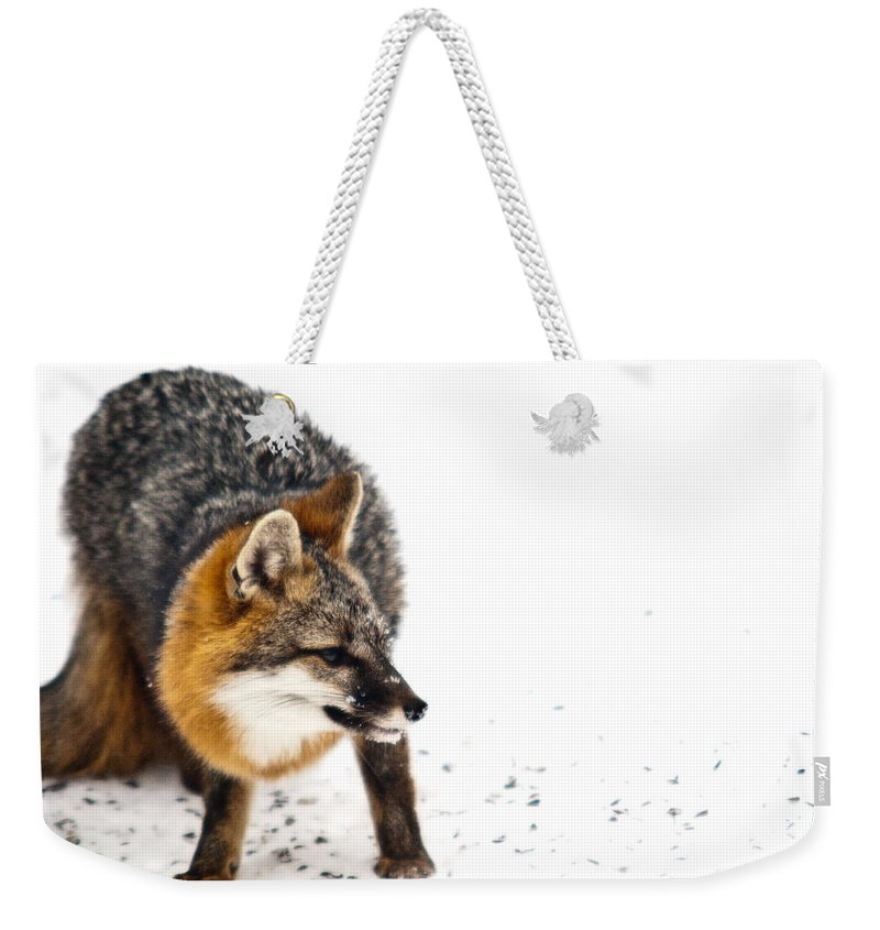 Red Weekender Tote Bag featuring the photograph Wary Red Fox by Douglas Barnett