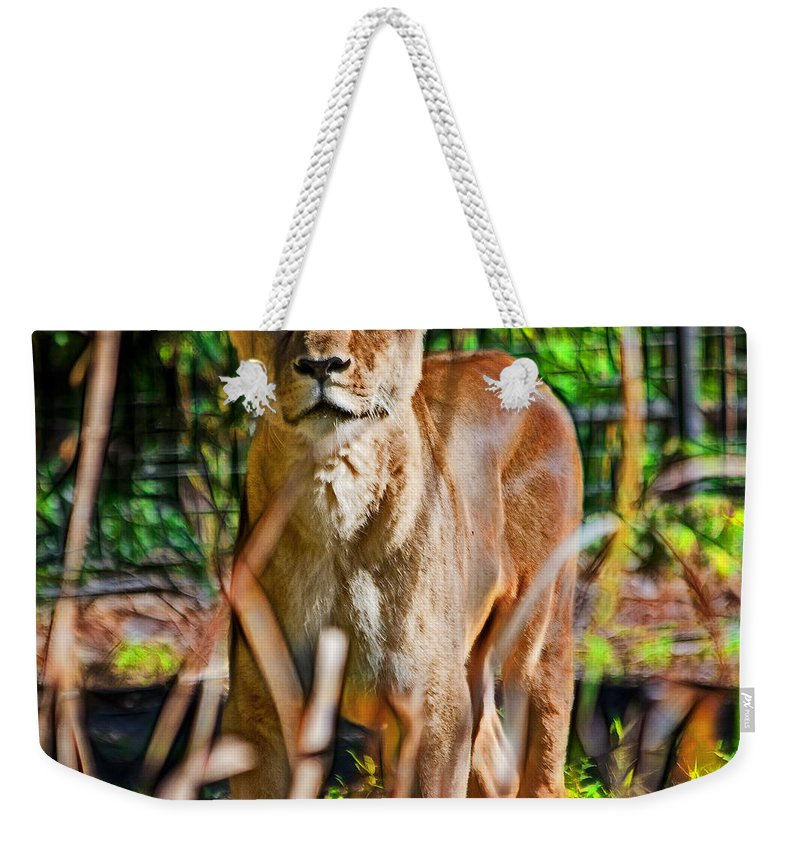 Lioness Weekender Tote Bag featuring the photograph Watchful Lioness by Miroslava Jurcik